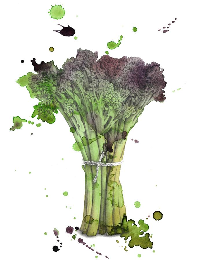'Broccoli' by 'Jenny Proudfoot
