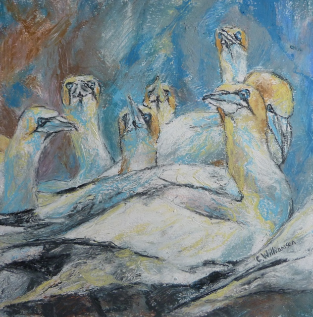 'BROODING GANNETS' by Claire Williamson